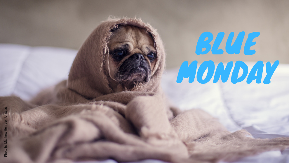 blue-monday-concours-kit